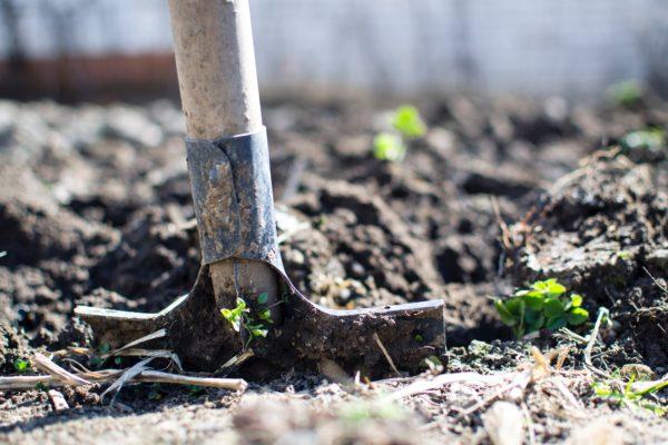 10 tips voor een beestenboel in je tuin
