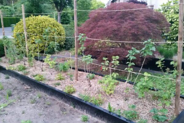 Permacultuur: tuinieren voor de luie tuinier
